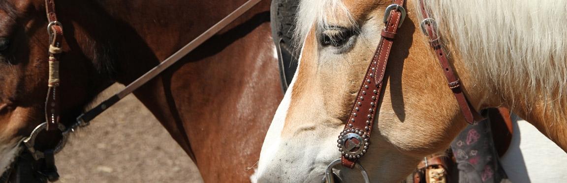 pferde_hell_dunkel_schmuck